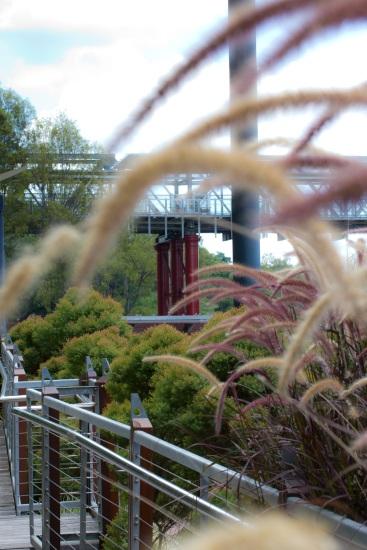 renovation work on the bridge, through a grass sea