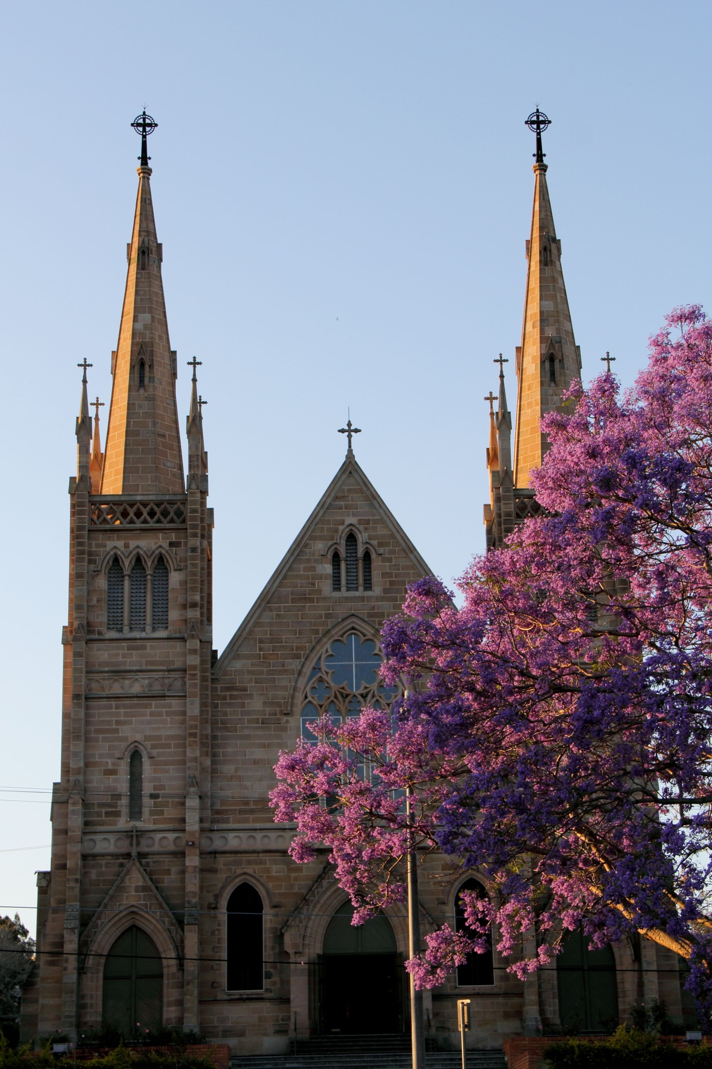 Jacaranda - St Mary's Cathedral - October
