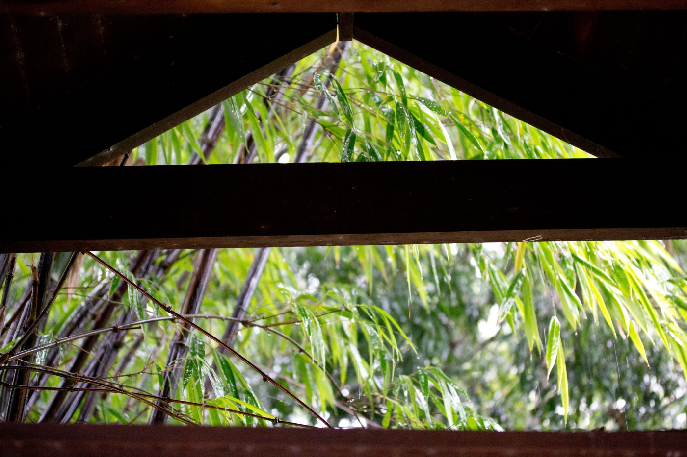 Black Bamboo, through the gatehouse roof, Nerima Gardens