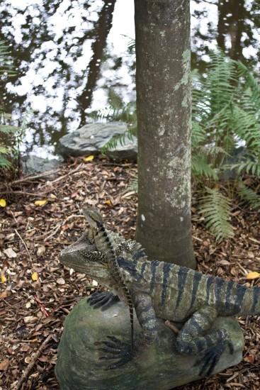 Reflections, Mt Coot-tha Botanic Gardens