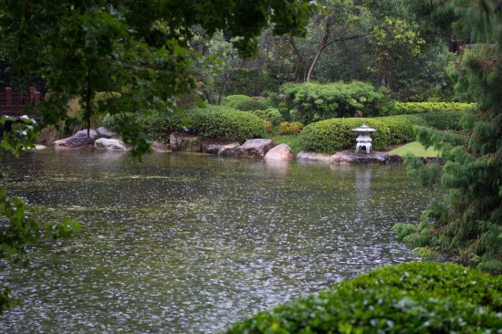 Nerima Gardens lake, during rain