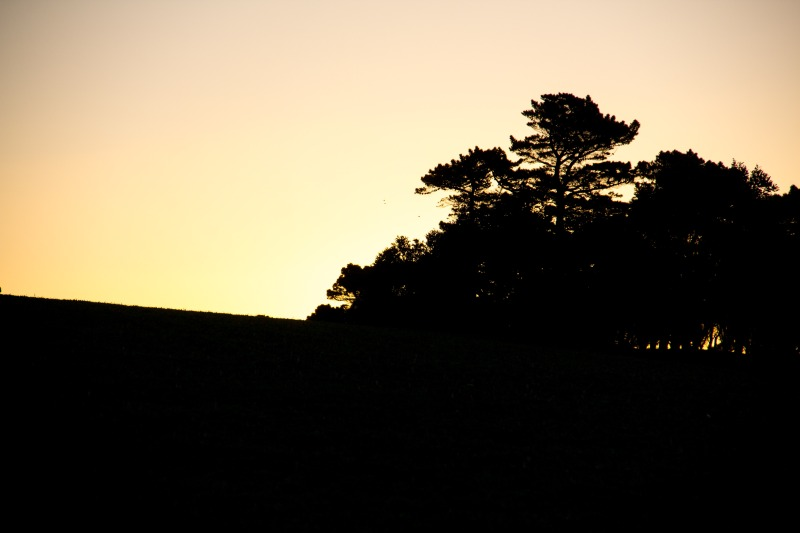 Golden sunset over the hill, Harington Point, Otago Peninsula
