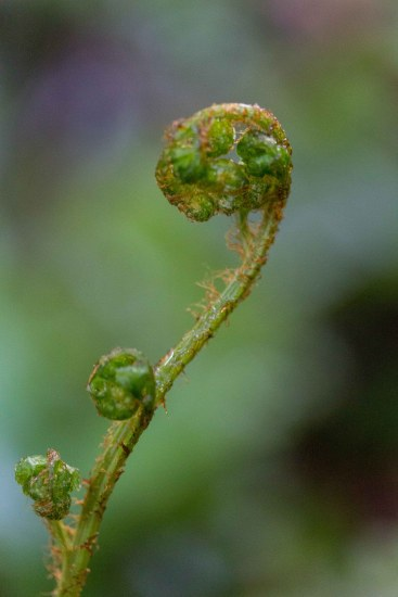 Fern frond, Lake Wilkie, The Catlins