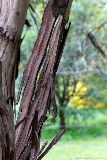 Bark, Macedon Ranges