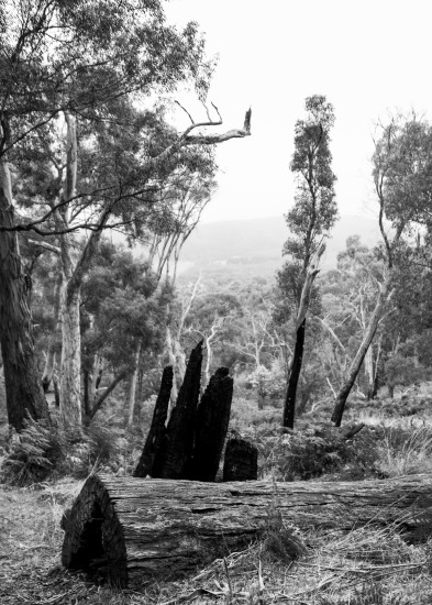 Hanging Rock Reserve-2891