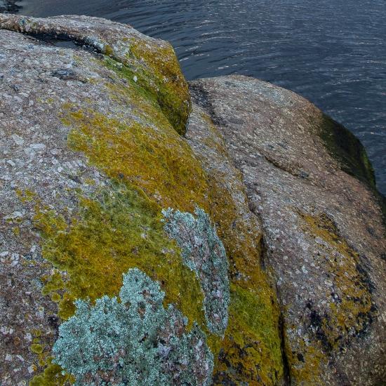 Light green Tidal River Lichen